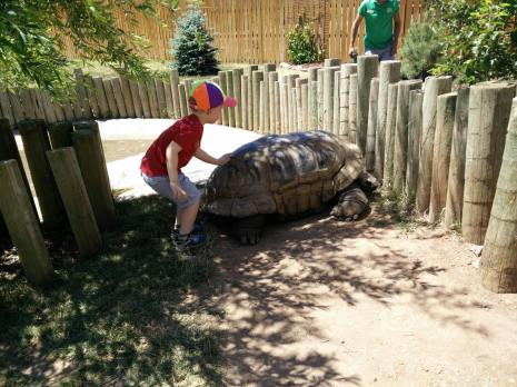 Giant Tortoise at Reptile Gardens