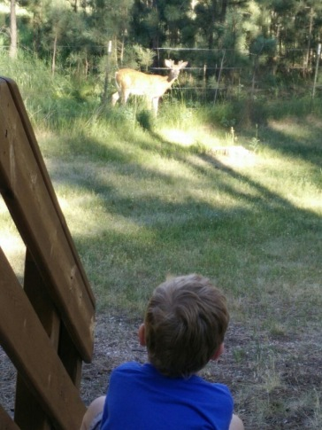 Nephew watching deer ....or deer watching nephew?