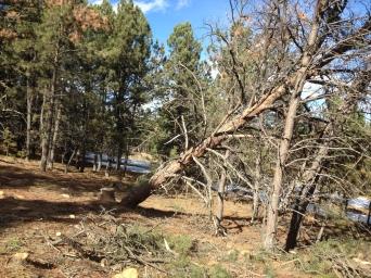 Stuck Tree