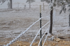 Frost on the barbed wire