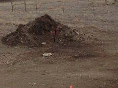 Dirt Pile that needs attention