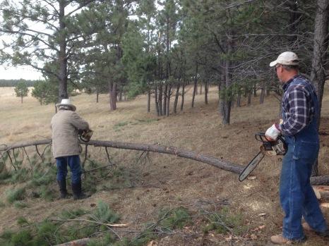 Cowboy and Farmer Daves cutting down trees