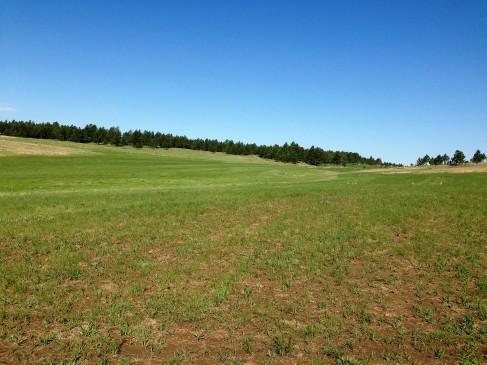 Fields of oats