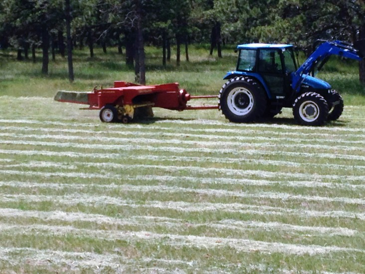 Bales coming off the baler