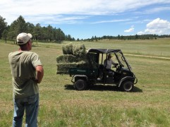 Hay stacked on Cowboy's Mule