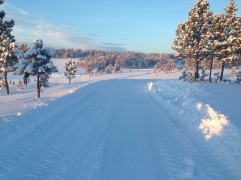 Driveway plowed by Dave