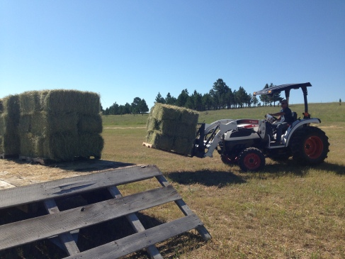 Loading the hay onto the trailer