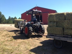 Offloading the trailer into the barn