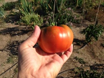 Fresh garden mater