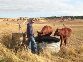 Rancher Dave watering his girls, Mar-zee and Honey