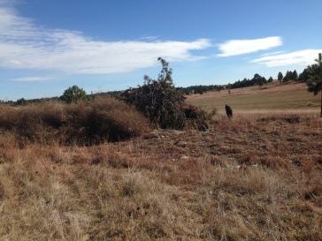Tumbleweeds on the burn pile