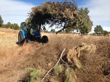 Rancher Dave and Babe move more slash on top of the tumbleweeds to keep them from blowing away