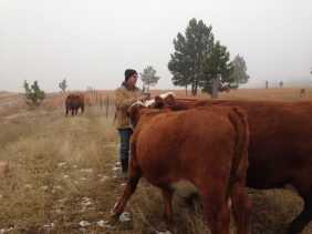 Rancher Dave giving his girls a scratch on the head
