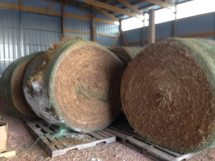 A barnload of extra hay