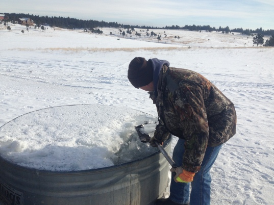 Dave shovels ice cubes out of the drinking hole.