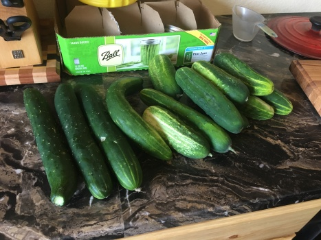 More cucumbers than we can handle