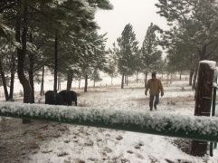 Rancher Dave feeding in the snow