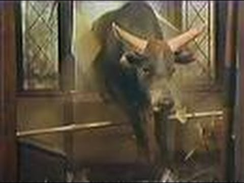 malt liquor bull