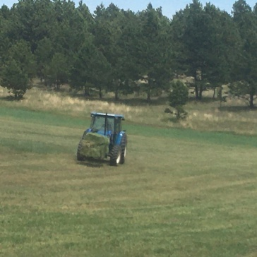 Pathetic Hay Season