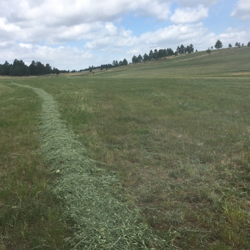 Pathetic row of hay
